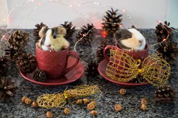 Christmas decoration. Little funny guinea pig in red cup with christmas hat and christmas decoration.