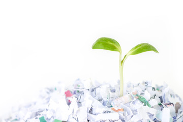 seed sprout growth recycle protect environment nature on white background