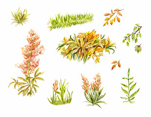 Leaves and blade of grass isolated on white. Autumn elements painted by hand in watercolor. Sketches of plants for light design