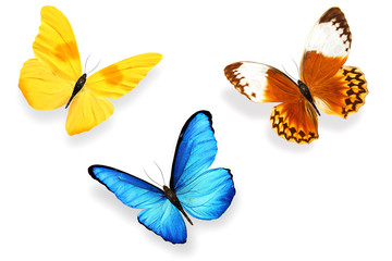 set of multicolored butterflies isolated on white background