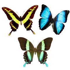 набор тропических бабочек изолированных на белом фоне