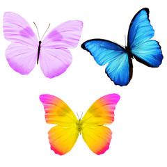 Три бабочки с яркими крыльями разных цветов изолированы на белом фоне