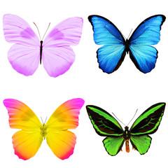Набор из бабочек разных цветов и разных размеров изолированы на белом фоне