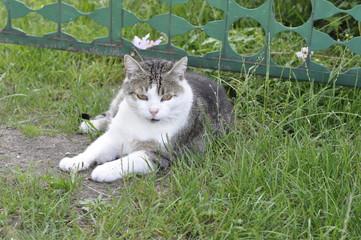 kot, zwierzę domowe