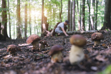 Obraz Man collect mushrooms in summer forest - fototapety do salonu