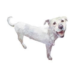 white dog watercolor illustration