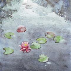 pink nenuphar lake