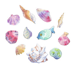 Seashell collection watercolor