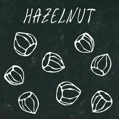 Black Board. Whole Unpeeled Hazelnuts in Shell. Healthy Snack. Autumn or Fall Harvest Collection. Realistic Hand Drawn High Quality Vector Illustration. Doodle Style.