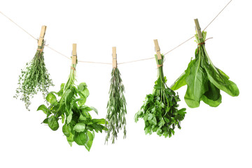 Fresh green herbs hanging on rope against white background
