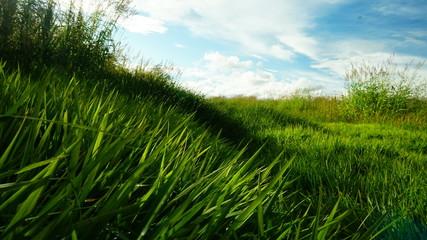 Grass Wanderer