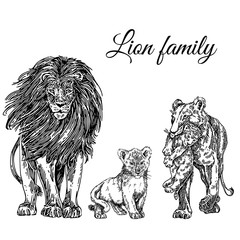 Animals set. Lion family: lion, lioness and two cub. Sketch. Engraving style. Vector illustration.