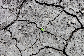 Pattern of mud cracks in dry soil with small green plant growing through the cracks