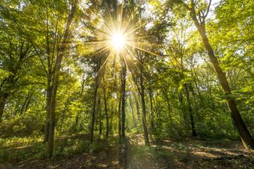 Wald vom Sonnenlicht durchflutet