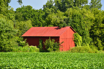 American Agricultural Heartland in Summer