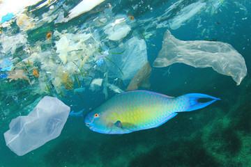 Plastic bags pollute sea and contaminate fish