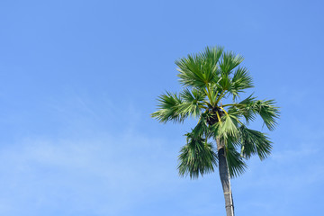 Palm Leaves and sky background.