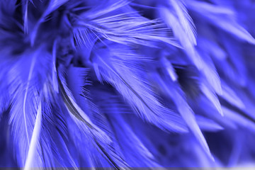 Bird and chickens feather texture abstract for background, soft focus and blur style