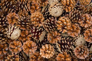 pile of pine cones