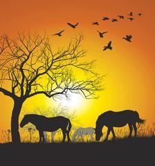 Horses on Sunset Background
