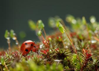 Drops on moss