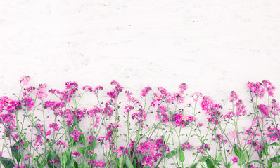 Beautiful Nature Spring Flower background