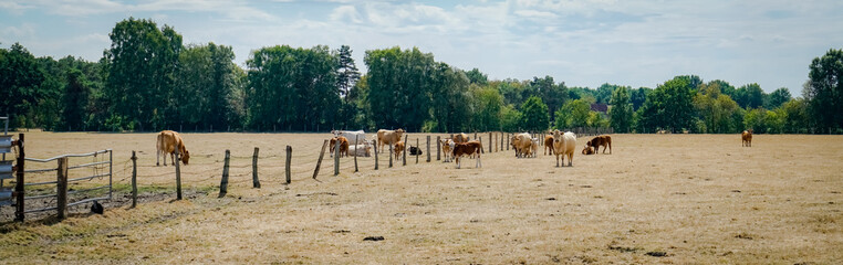 Klimawandel - Dürre, vertrocknete Rinderweiden