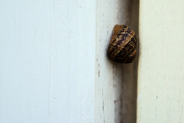 Snail in the middle of white fence
