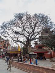 Old Tree at Durbar Square in Kathmandu