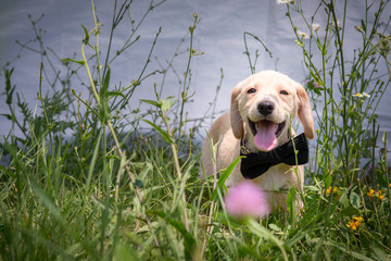 Puppy posing in the grass