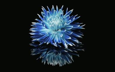 Canvas Prints Dahlia blue dahlia