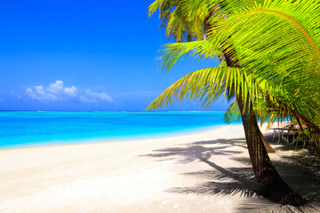 Dream beach with palm trees on white sand and turquoise ocean