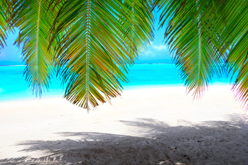 Wall Mural - White dream beach with green palm leaves in front of turquoise ocean