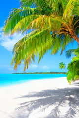 Fotobehang Eiland Dream beach with palm trees on white sand and turquoise ocean