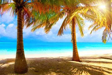Wall Mural - Sunny beach with palm trees on white sand and turquoise ocean