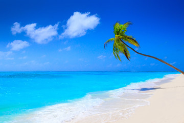 Wall Mural - Dream beach with palm tree on white sand and turquoise ocean