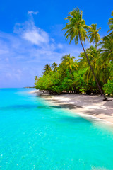 Photo sur Plexiglas Turquoise Dream beach with palm trees on white sand and turquoise ocean