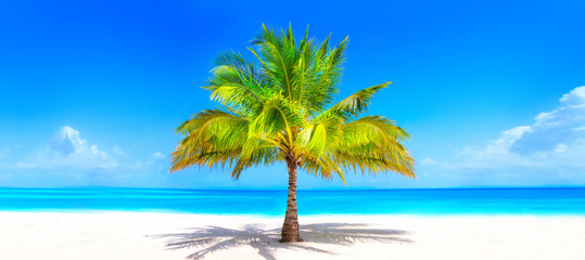 Photo sur Aluminium Palmier Surreal and wonderful dream beach with palm tree on white sand and turquoise ocean