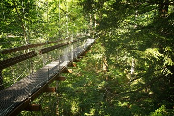 Canopy Walk at the Holden Arboretum in Cleveland, Ohio