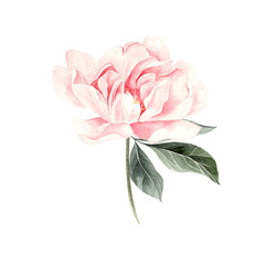 Beautiful Watercolor set with peony.