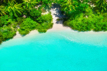 Wall Mural - White sand beach with turquoise water and green plants from above