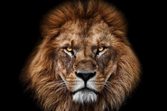 Face Lion King