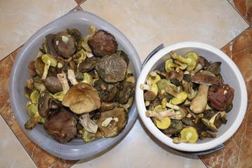 ведро лесных грибов