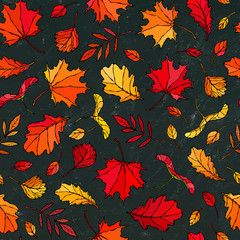 Black Board. Seamless Endless Pattern of Autumn Leaves. Maple Rowan, Oak, Hawthorn, Birch. Red, Orange and Yellow. Realistic Hand Drawn High Quality Vector Illustration. Doodle Style.
