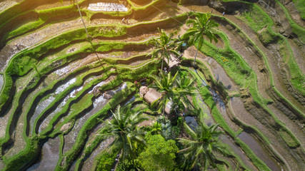 Aerial view Tegalalang Rice Terrace in Ubud, Bali, Indonesia