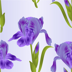 Seamless texture flower violet iris  with leaves  colored sketch isolated on a blue background vintage vector illustration editable hand drawn