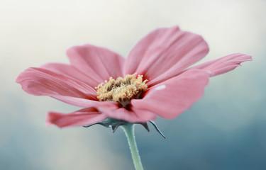 Leinwandbilder - Różowy kwiat