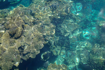 Water surface above coral