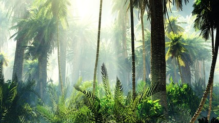 Tropical jungle in the fog. Palms in the morning.