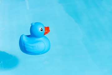 A single blue rubber duck floats in a paddling pool